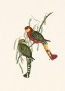 ParrotsS